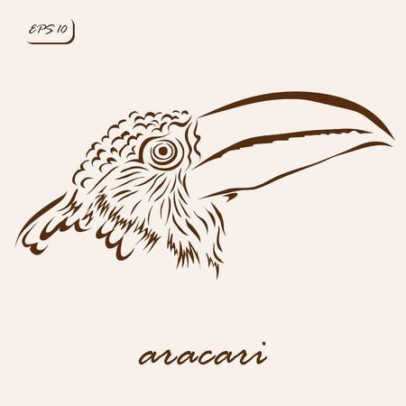 Vector illustration. Illustration shows a ARACARI bird
