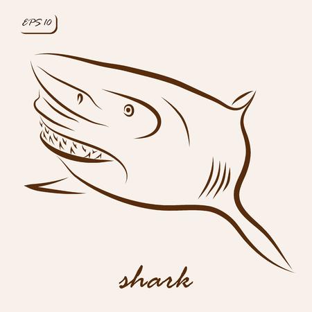 Vector illustration. Illustration shows a shark