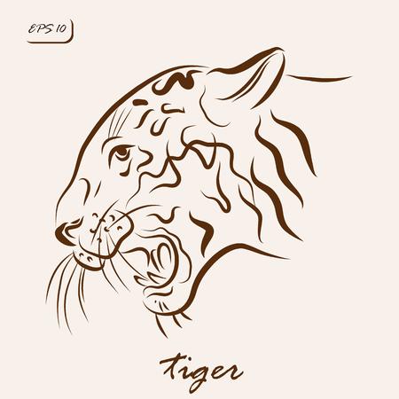 Vector illustration. Illustration shows a tiger