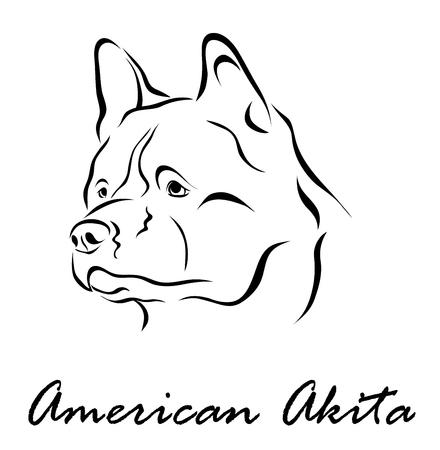 akita: Vector illustration. Illustration shows a dog breed American Akita Illustration