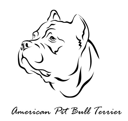 Vector illustration. Illustration shows a dog breed American Pit Bull