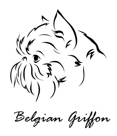griffon: Vector illustration. Illustration shows a dog breed Belgian Griffon