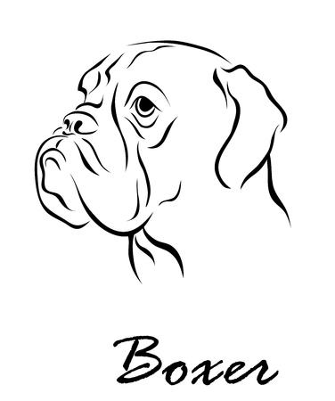 Vector illustration. Illustration shows a dog breed Boxer