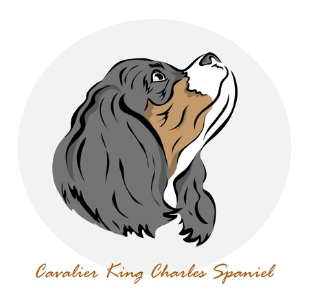 charles: Vector illustration. Illustration shows a dog breed Cavalier King Charles