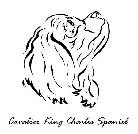 Vector illustration. Illustration shows a dog breed Cavalier King Charles