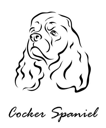 Vector illustration. Illustration shows a dog breed Cocker Spaniel