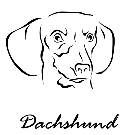 Vector illustration. Illustration shows a dog breed Dachshund