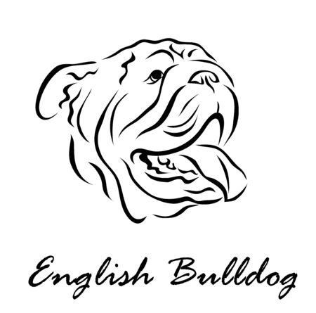 Vector illustration. Illustration shows a dog breed English Bulldog