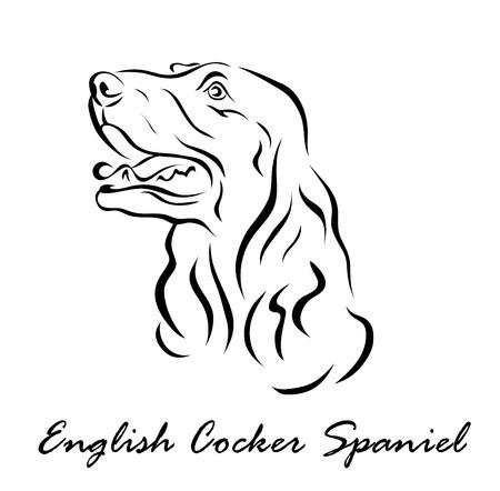 Vector illustration. Illustration shows a dog breed English Cocker Spaniel
