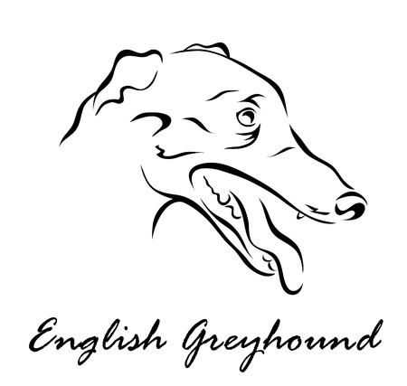 Vector illustration. Illustration shows a dog breed English GreyHound