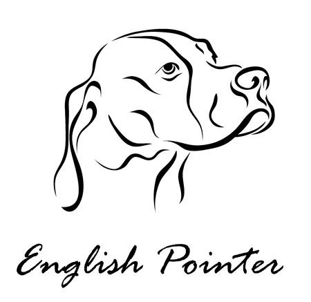 Vector illustration. Illustration shows a dog breed English Pointer Illustration