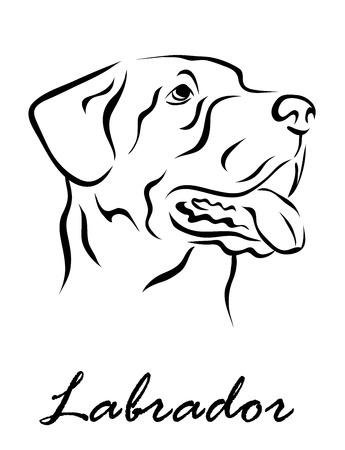 Vector illustration. Illustration shows a dog breed Labrador Illustration
