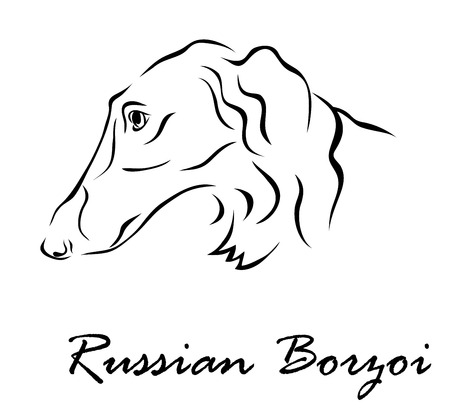 borzoi: Vector illustration. Illustration shows a dog breed Russian Borzoi Illustration