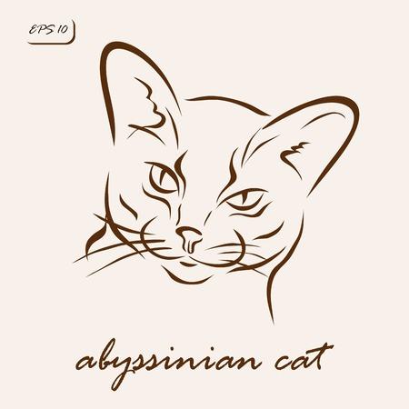 Vector illustration. Illustration shows a cat breed Abyssinian cat Illustration
