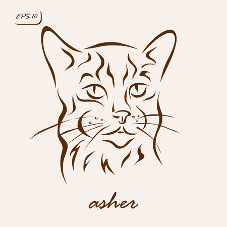 asher: Vector illustration. Illustration shows a cat breed Asher