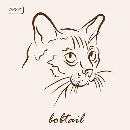 Vector illustration. Illustration shows a cat breed Bobtail Illustration