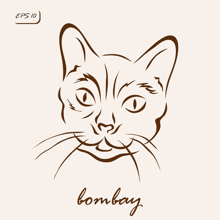 Vector illustration. Illustration shows a cat breed Bombay