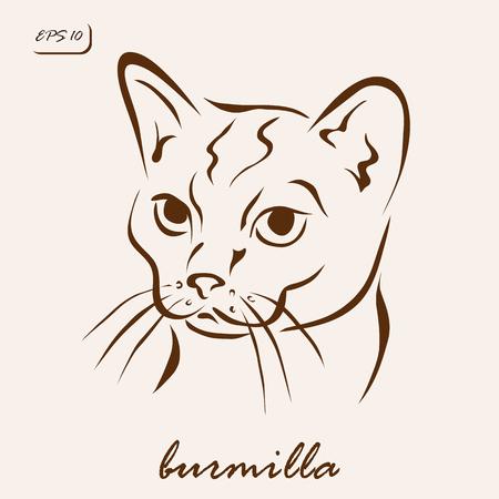 Vector illustration. Illustration shows a cat breed Burmilla