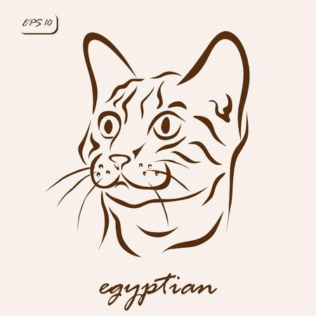 Vector illustration. Illustration shows a cat breed Egyptian