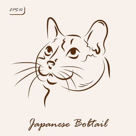 Vector illustration. Illustration shows a cat breed Japanese Bobtail Illustration