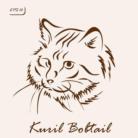 Vector illustration. Illustration shows a cat breed Kuril Bobtail Illustration