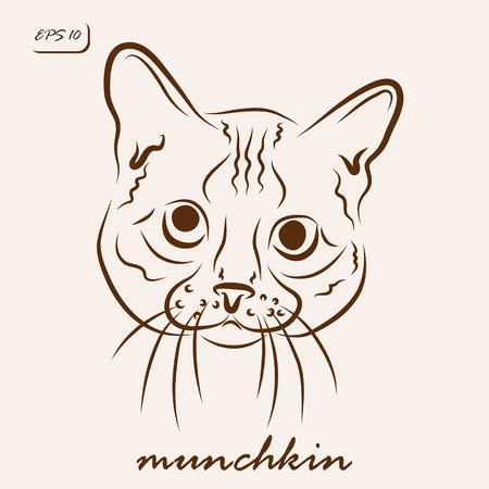 Vector illustration. Illustration shows a cat breed munchkin Illustration