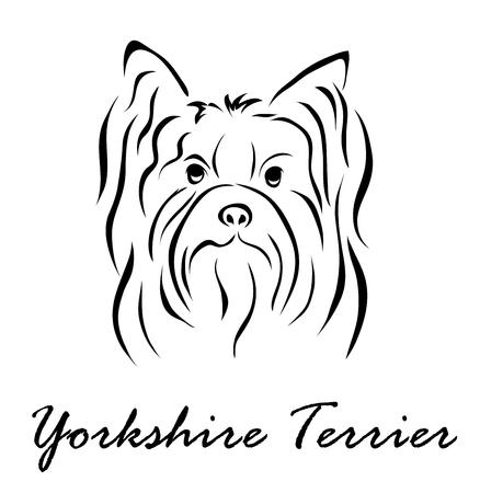 Vector illustration. Illustration shows a dog breed Yorkshire Terrier