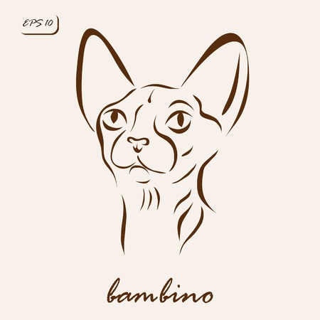 bambino: Vector illustration. Illustration shows a cat breed Bambino Illustration