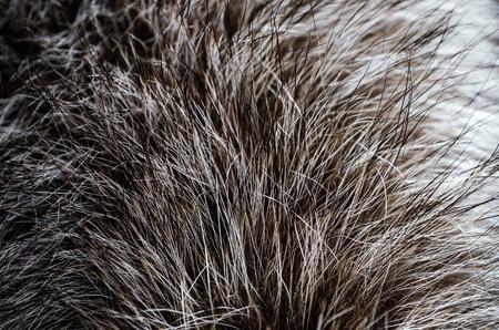 Fur closeup. Background textured Stock Photo