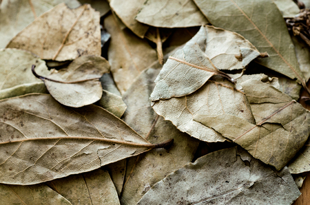 Bay leafs close-up. Background Stock Photo