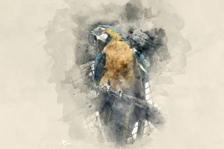 aviary: Yellow-blue parrot. Watercolor background