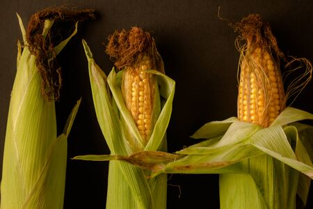 A composition of freshly harvested corn cobs against a dark material background.