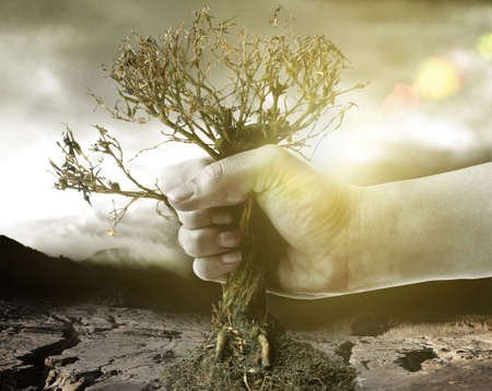 catastrophic: hand holding dry tree infront of a catastrophic background Stock Photo