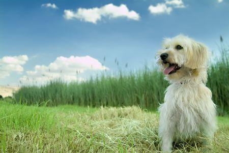 Domestic dog enjoying nature photo