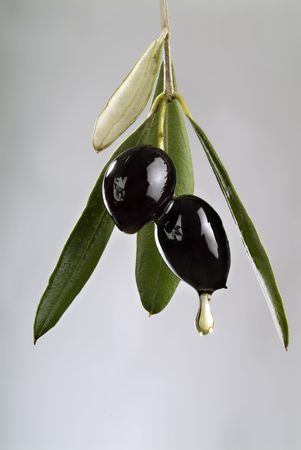 drop of oil from two black olives on branch isolated Stock Photo - 2151344