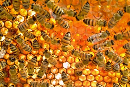 Bees inside a beehive  Stock Photo