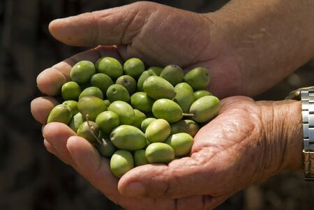 olives in old mans hand photo