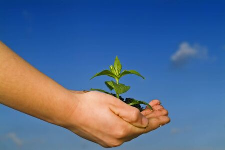 child hands holding plant against clear blue sky Stock Photo - 2525707