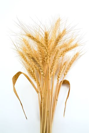 Bundle of Wheat isolated on white photo