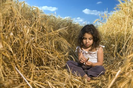 cropland: littel girl sitting in a wheat field