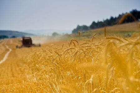 red combine working in a wheat field Stock Photo - 3037970