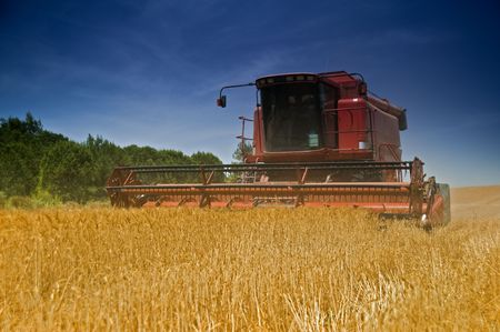 red combine working in a wheat field photo