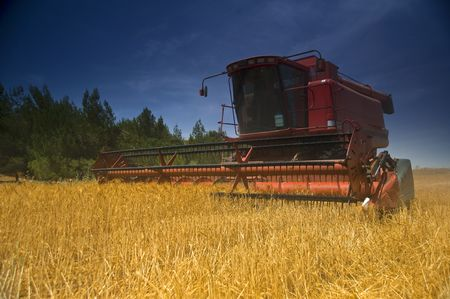 red combine working in a wheat field Stock Photo - 3032359