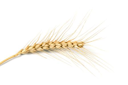 close-up of stalk of wheat