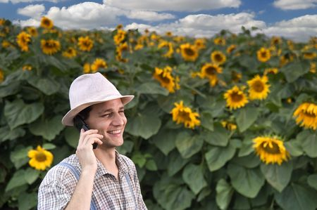 warms: farmer standing in front of a sunflower field talking on the phone