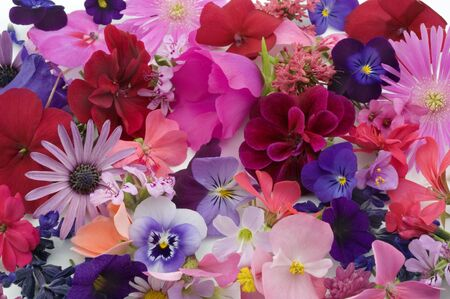background of various flowers heads Stock Photo - 3112583
