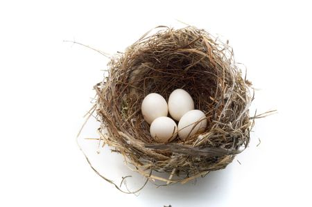retirement nest egg: birds nest with four eggs isolated on white Stock Photo