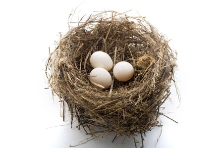 birds nest with three eggs isolated on white photo