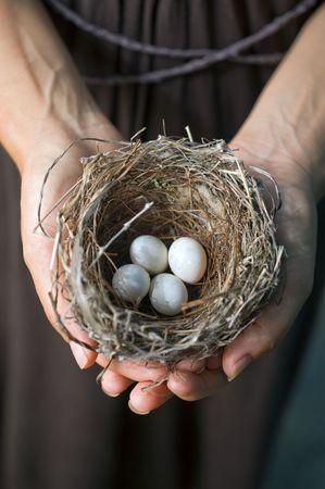 nido de pajaros: nido con huevos en las manos de mujer