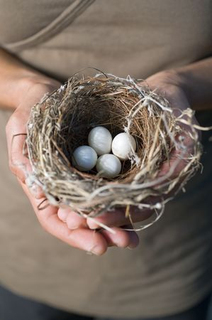 more mature: nest with eggs in womans hands Stock Photo